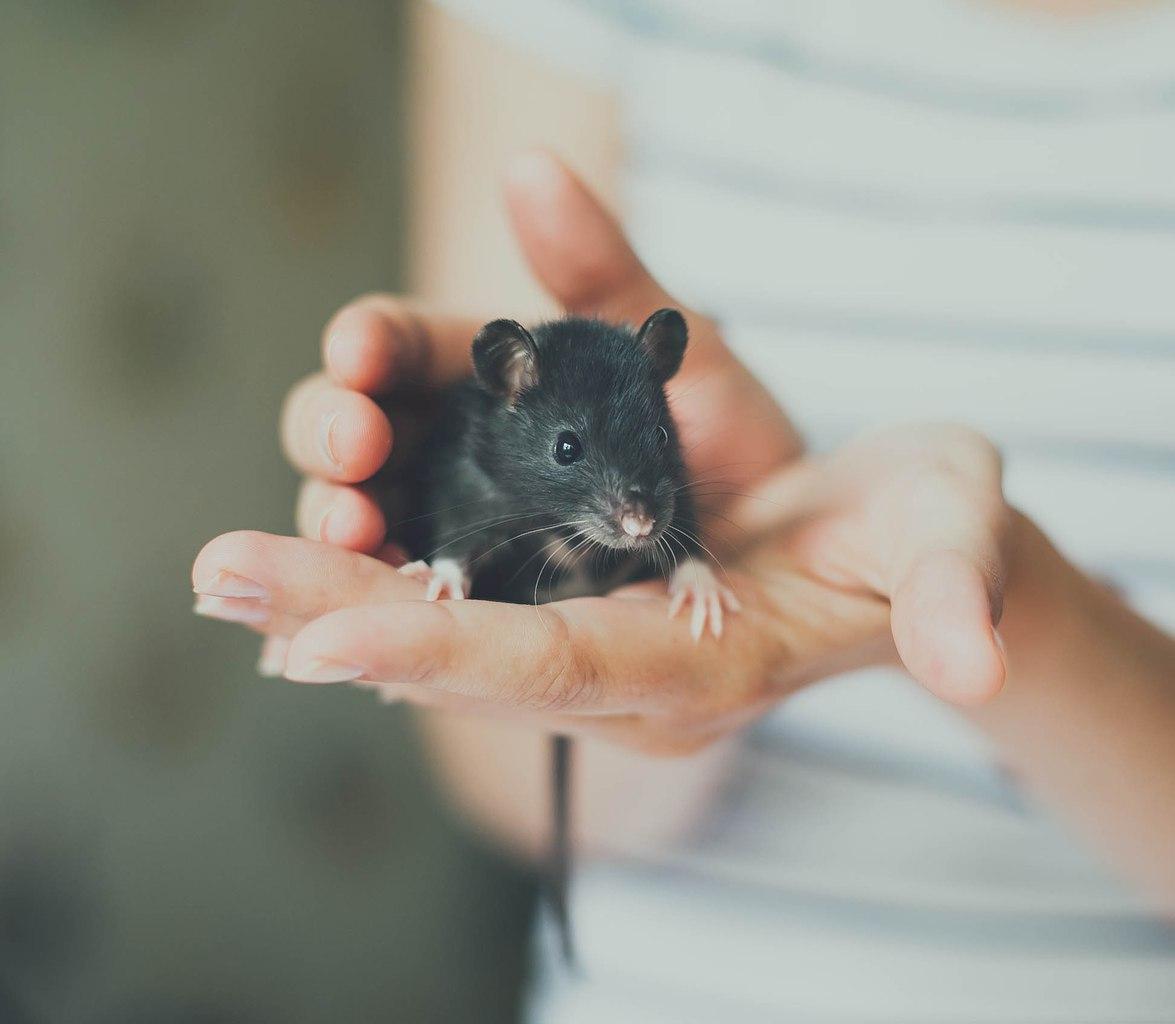 Эти маленькие существа, крысы, скорее всего не нуждаются в имени, но нам, людям, важно как назвать крысу.